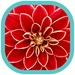 Flowers HD Wallpapers For PC (Windows & MAC)