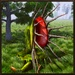 Pitcher Plant Simulator For PC (Windows & MAC)