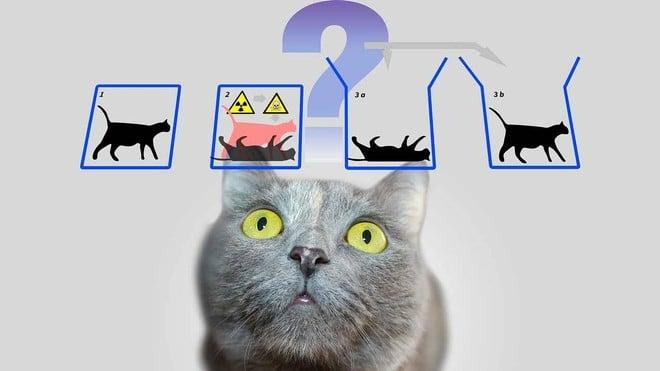 Schrödinger's cat .